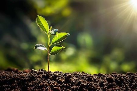 plant-growing-licensed